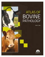 Atlas of bovine pathology