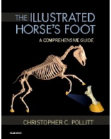The Illustrated Horse's Foot, 1st Edition